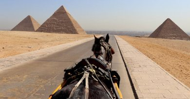 A total of 930 horses in Egypt were randomly selected, with several tests used to confirm the seropositive status of the animals.