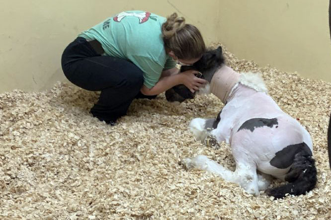 Eros recovering at Palm Beach Equine Clinic.