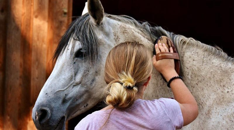 Researchers scrutinised submissions and changes between 1988 and 2019 relating to horses, cattle and pigs.