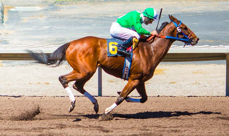 Injury risk was found to be higher in workouts for horses switching from dirt/synthetic to turf racing.