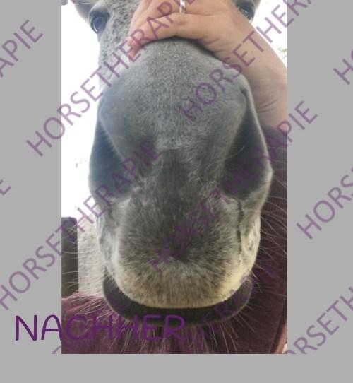 Craniosacral - Pferd nach Craniosacralbehandlung Gesichtslähmung