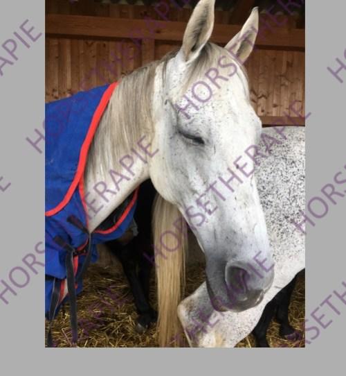 Magnetfeld - Pferd während Magnetfeld Behandlung