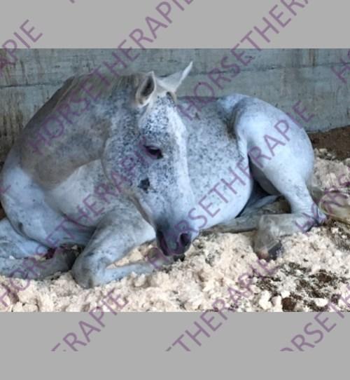 Therapien - Pferd entspannt im Offenstall