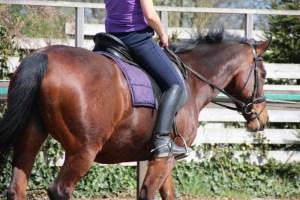 Halsstrekken tijdens je training: beloning voor je paard