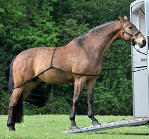 traileroplaadhulp om zelf je paard makkelijk te laden in de trailer