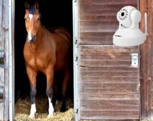 stalcamera paard op stal