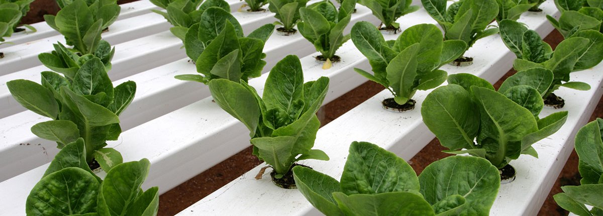 Dutch Agri-Tech & Trade ready to offer a suitable horticulture