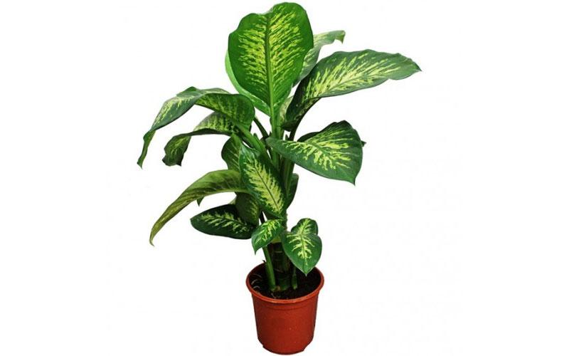 Indoor Plants Dubai
