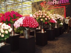 dutchflowershow1