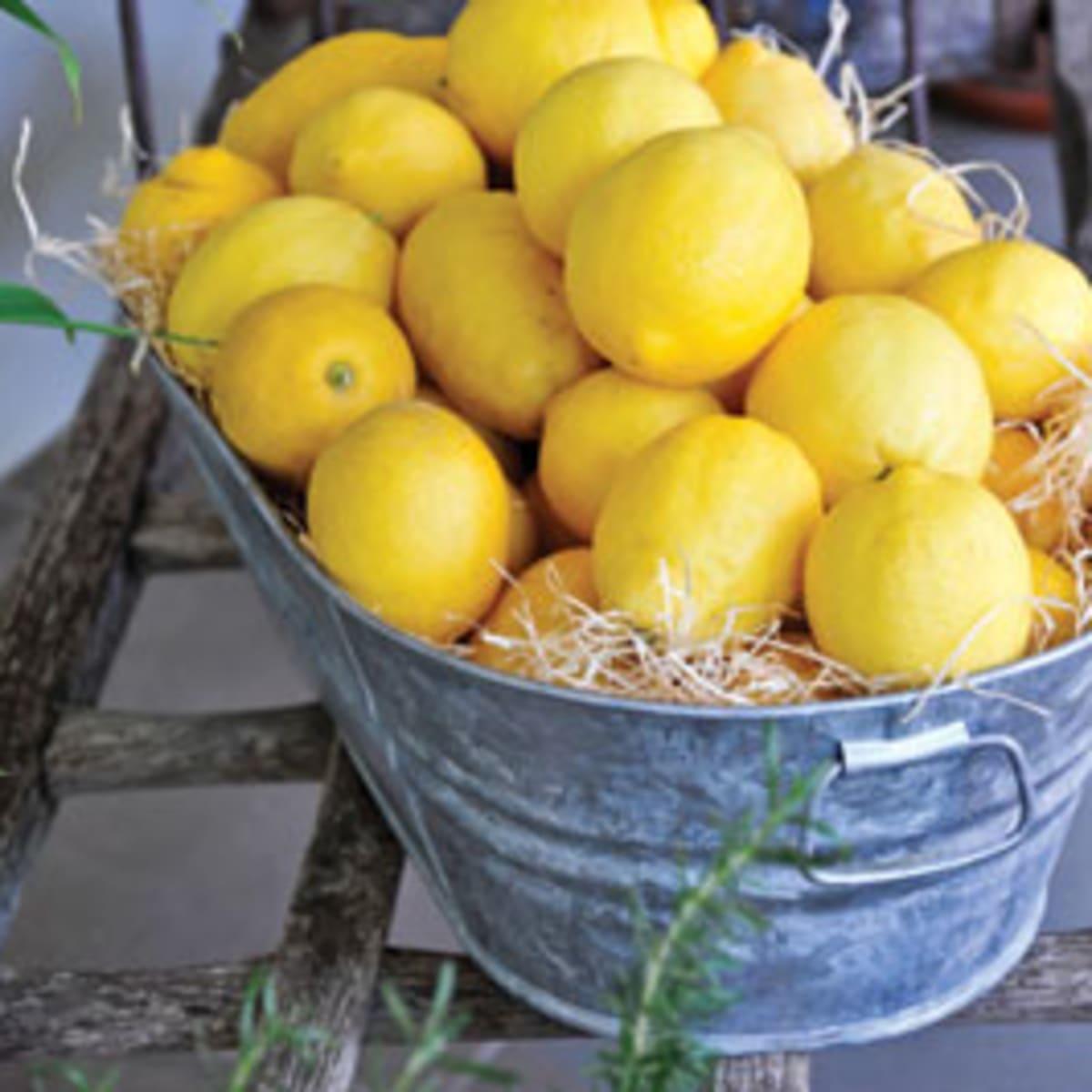 meyer lemon is the winner for homegrown