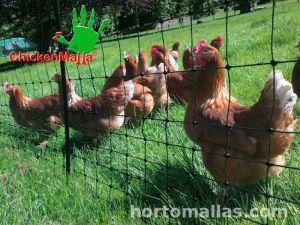 Malla ChickenMalla