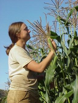 AP Dakia with corn
