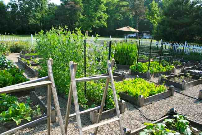 How to Plan a Vegetable Garden That Will Flourish | Hort Zone