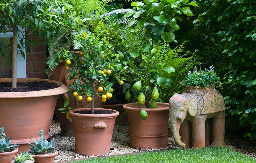 9 Delicious Fruits to Grow On Your Balcony in 2018