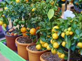 8 Fruit Gardening Tips For Juicy Fruits In 2020