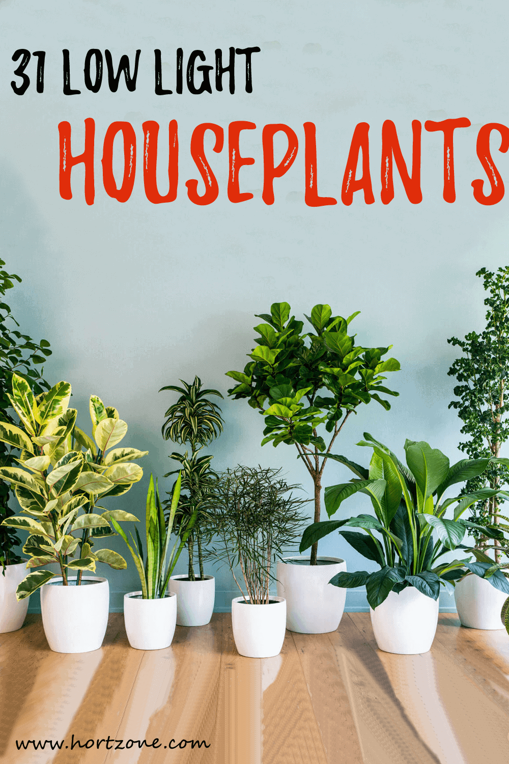 31 Low Light Houseplants That You Shouldn't Miss Out | Hort Zone Low Lighthouse Plants That Like on low desert plants, low garden plants, low growing plants for front of house, low floral plants, low mountain plants, low water plants, low sun plants, low light plants, low butterfly plants, low light palm trees,