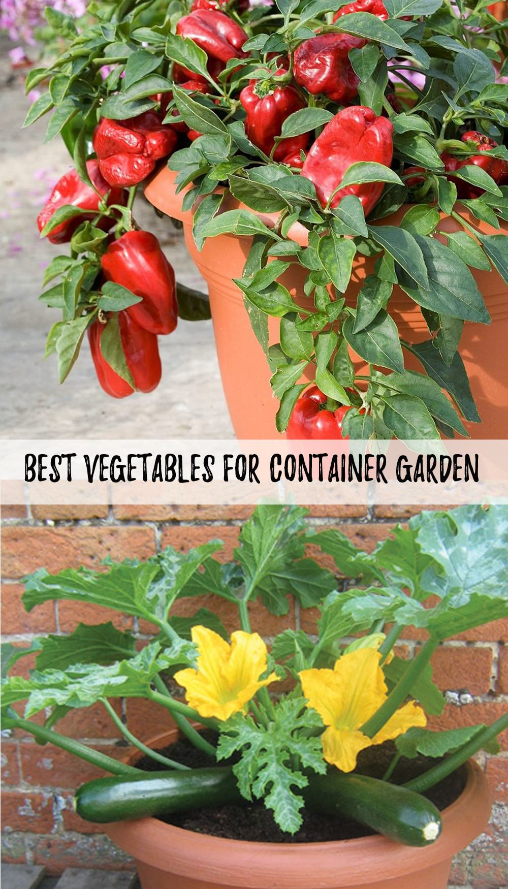 Best Vegetables for Container Gardening