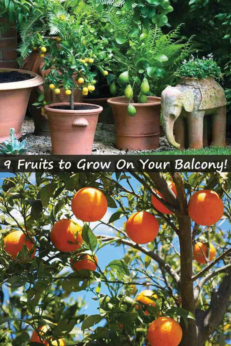 9 Delicious Fruits to Grow On Your Balcony