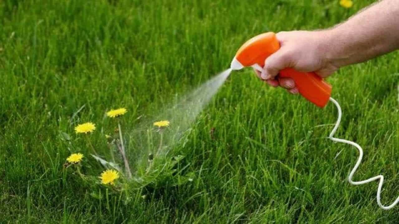 Best Weed Killer for Gardens? Hint: It's NOT Roundup