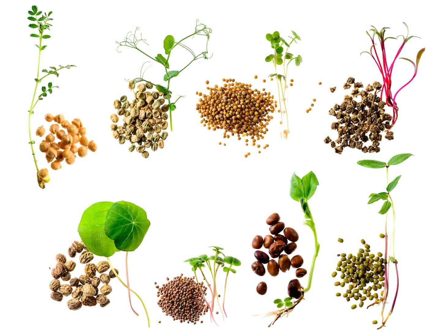 19 Microgreens to Grow Indoors Any Time of the Year