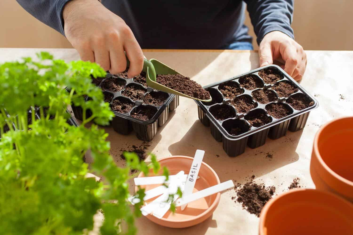 A Complete Guide on How to Sow Seeds Indoors