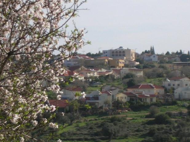 """שקדיות ט""""ו בשבט - ברקע המרכז הרוחני של הושעיה (בית הכנסת)"""