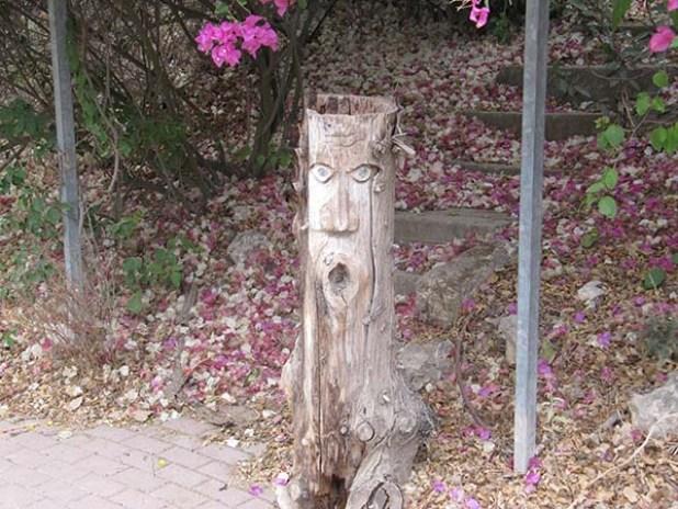 """נשמה בגזע עץ של בית הבד """"ריש לקיש"""""""