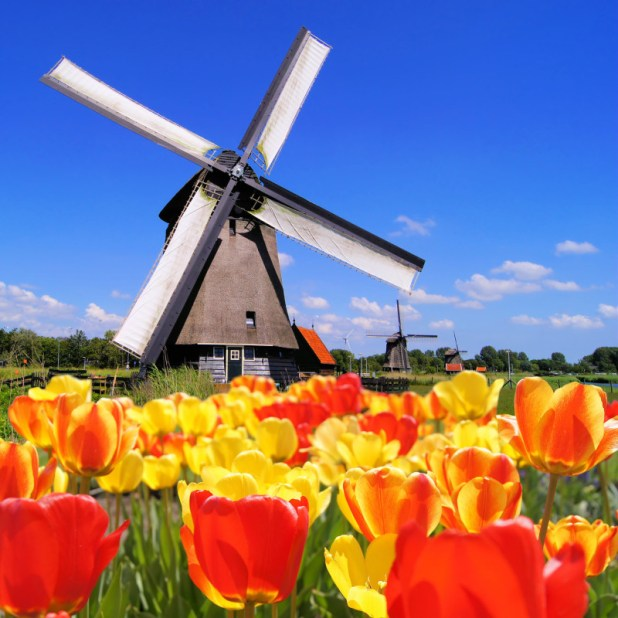 Frolic-Among-Tulips Holland