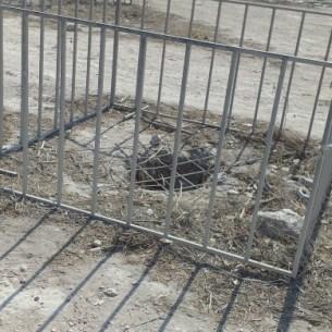 חפירות בית שערים העתיקה - בור מים