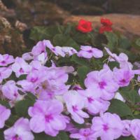 GardenFeatImage2