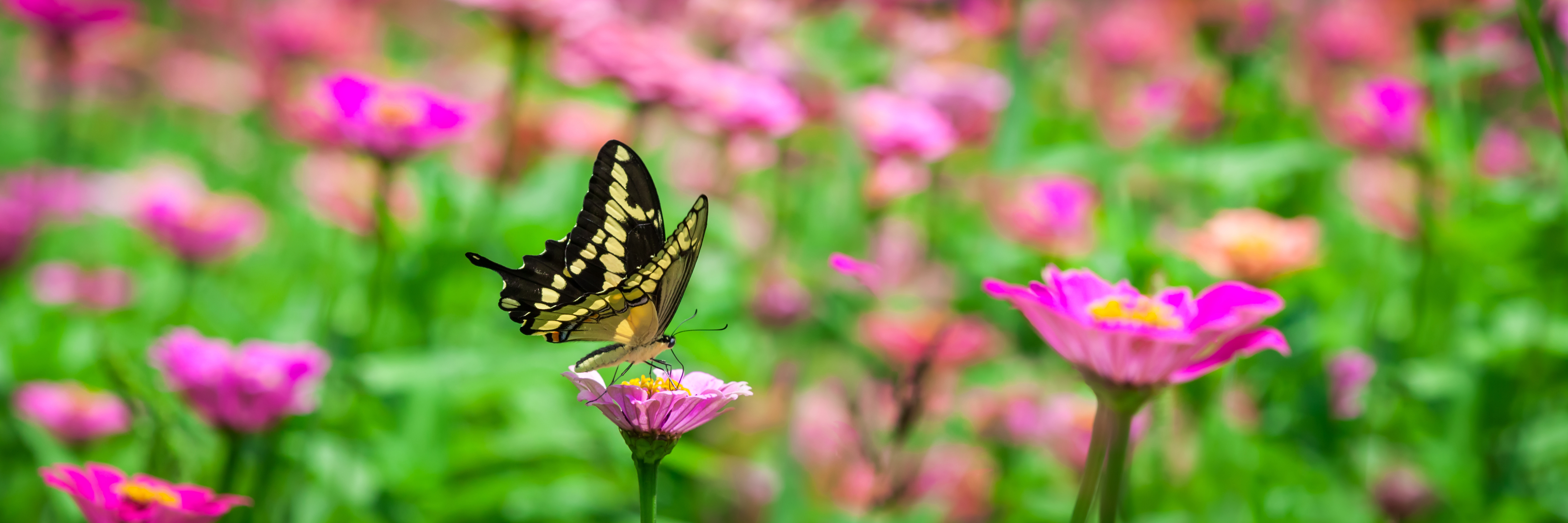 Ohio's Hospice Of Miami County Annual Butterly Release Slated For July 30