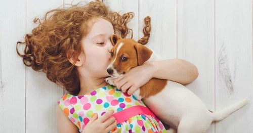 Alergia a animais domésticos: o que fazer?