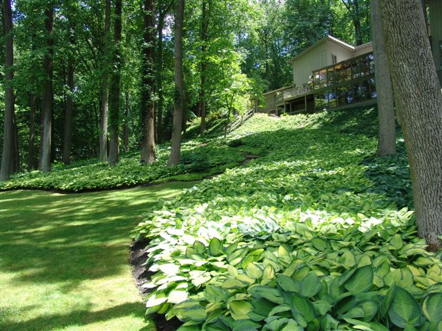 Hosta make excellent blooming ground cover.