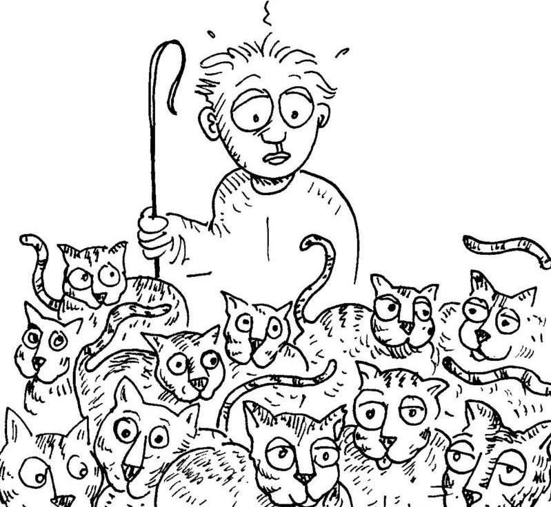 herding cats at swim meets hostgreatmeets com