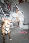 Miley Cyrus - Plastik Magazine Naked Photoshoot (NSFW)