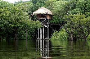 Hotéis de Selva