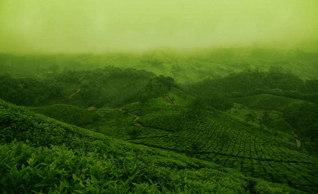Environment Sustainabili-Tea