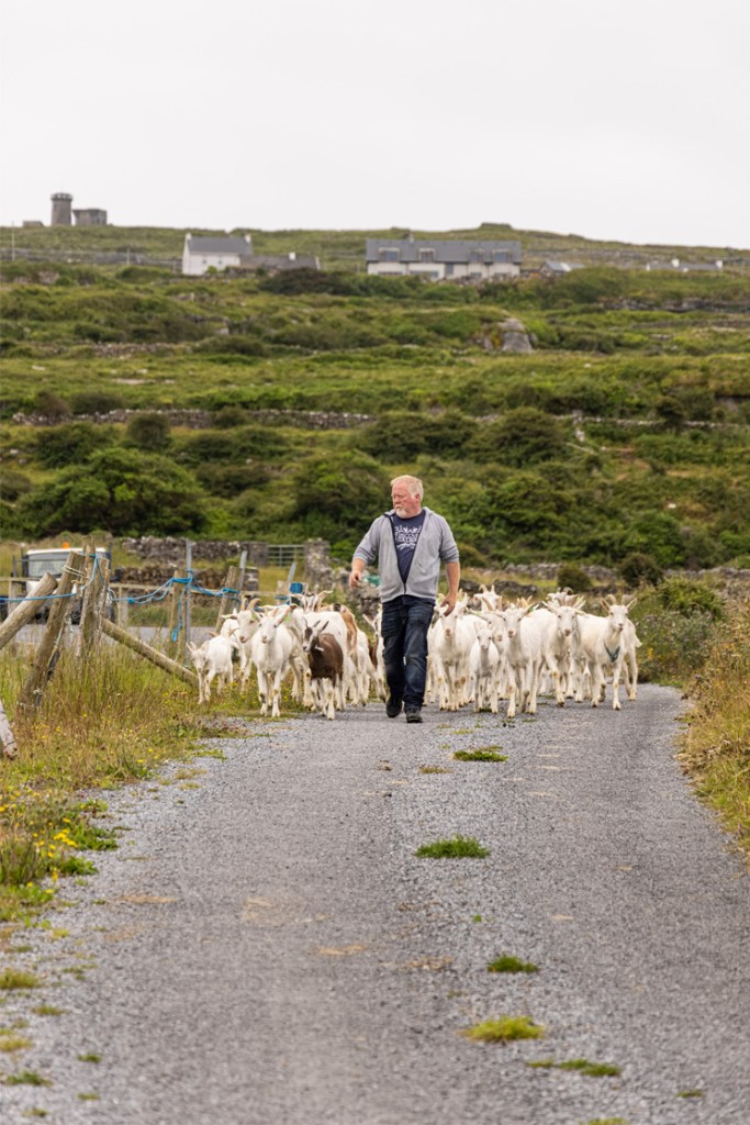 Autumn with Aran Island Ferries and a Brand new Aran Food Tour