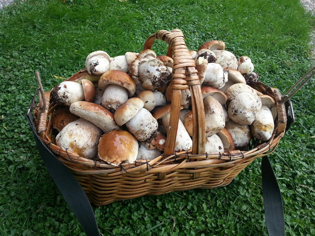 Risultati immagini per cestino funghi