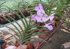 Cultivo de flores