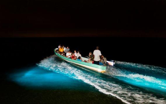 hoteles-boutique-en-mexico-estrellas-en-el-mar-descubre-la-bioluminicencia-en-isla-holbox . .