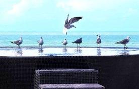 Hoteles-Boutique-de-Mexico-villas-flamingos-y-su-homenaje-a-holbox-1
