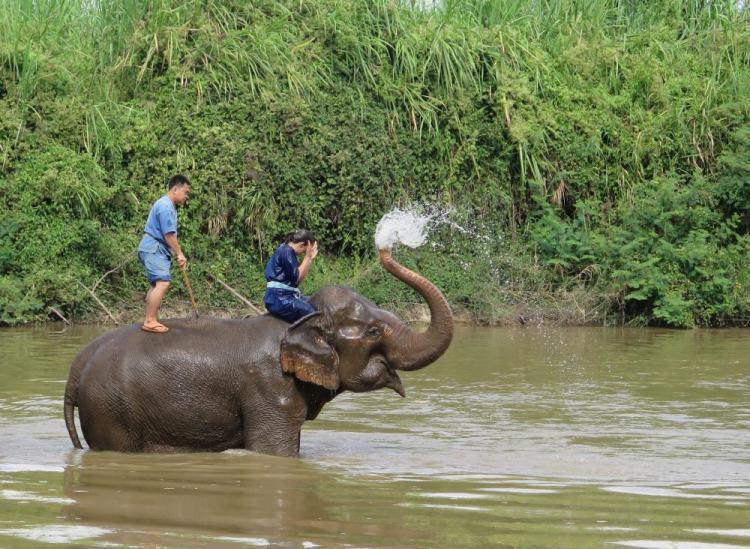 elefante no golden triangle