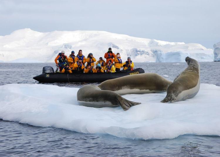 focas na Antártica