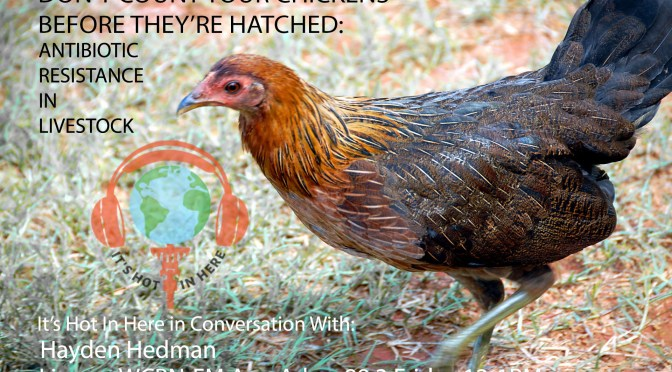 Don't Count Your Chickens Before They've Hatched: Antibiotic Resistance in Livestock