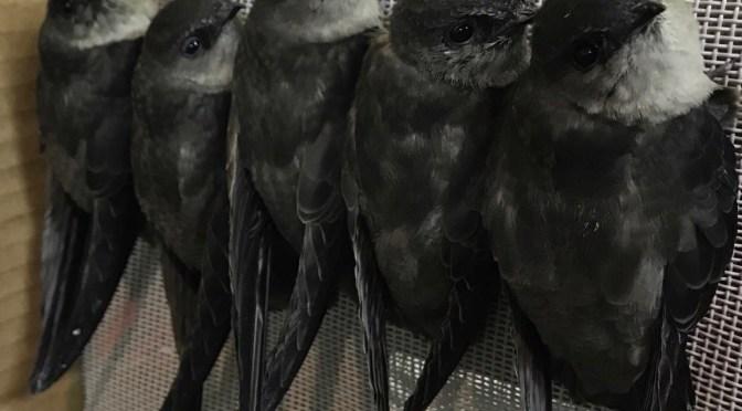 Bird Center of Washtenaw County