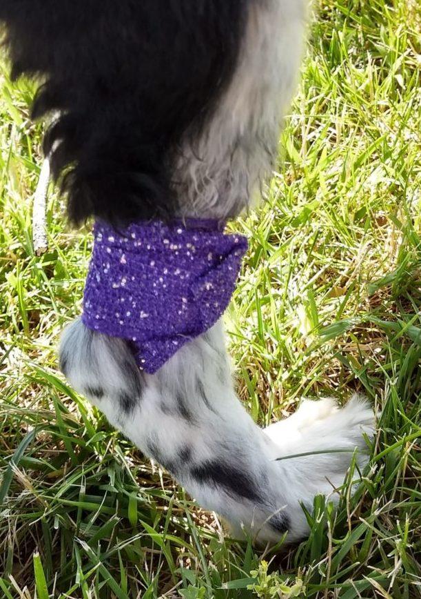 Purple sparkle vet wrap on chemo site