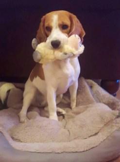 Abby, 2 Jahre