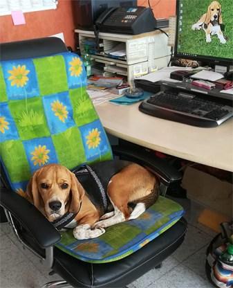 Büro - Beagle