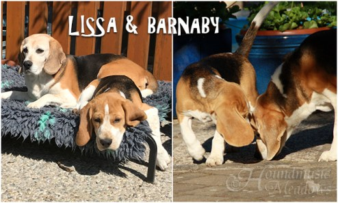 Barnaby & Omi Lissa